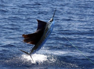 Excelente participación en el certamen pesquero.