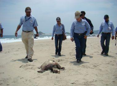 Las acciones de saneamiento se concluirán en el plazo máximo de 10 días en las playas de Salina Cruz